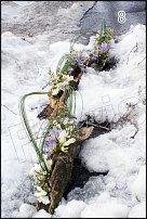 www.floristic.ru - Флористика. Март - 2011 - Весенний ручей