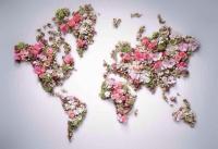 Прямые поставки цветов по оптовым ценам из Голландии и Эквадора до вашего города  https://vk.com/club78831358
